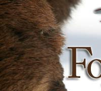 Fortunate Wilderness Banner